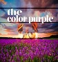 THE COLOR PURPLE – THE MUSICAL
